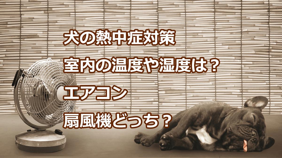 犬の熱中症対策 室内の温度や湿度は?エアコン扇風機どっち?