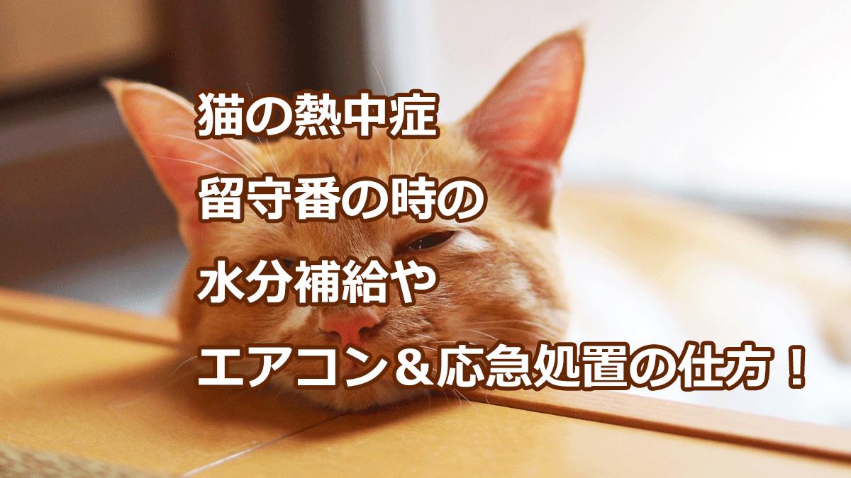 猫の熱中症 留守番の時の水分補給やエアコン&応急処置の仕方!