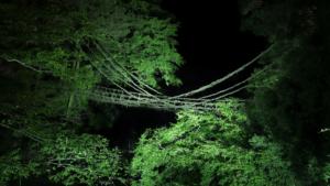 かずら橋ライトアップ