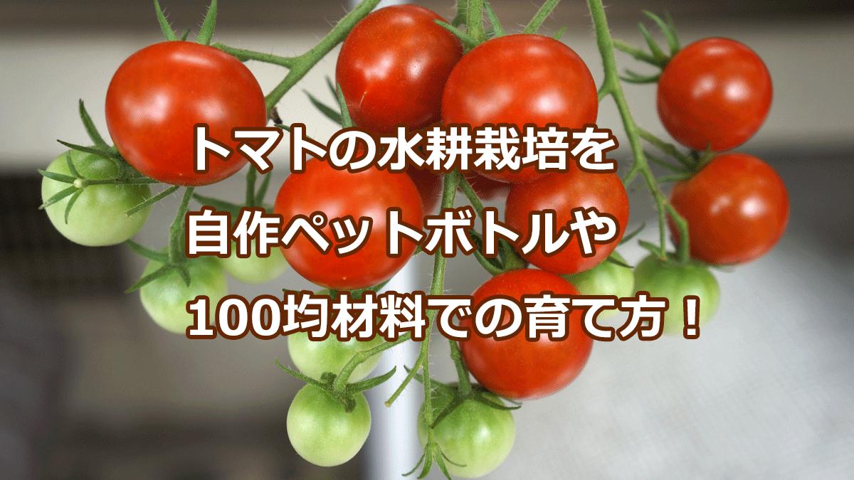 トマトの水耕栽培を 自作ペットボトルや 100均材料での育て方!